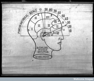 L0025619 Phrenology: the human and animal brain, the location of its