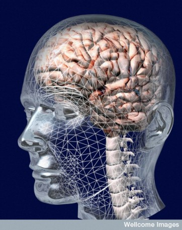 B0005787 Position of the brain inside the head